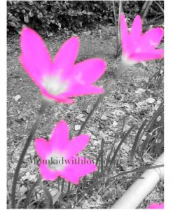 ดอกไม้2